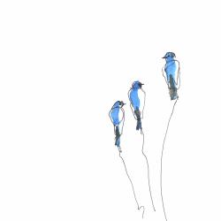 Three-Bluebirds