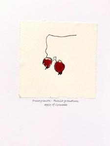 Pomegranate-Punica-granatum-apple-of-Grenada-Greeting-Cards