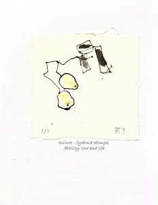Quince-Cydonia-Oblonga-Greeting-Cards
