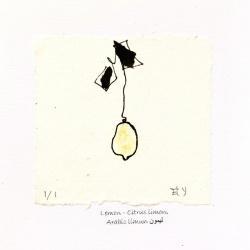 Lemon-Citrus-Limon-Greeting-Cards