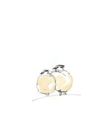 Animal Greeting Cards - Rock Ptarmigan Birds
