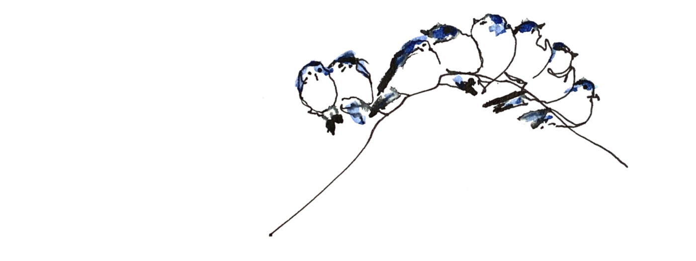 animals greeting cards series - drawing of birds huddled together on a wire